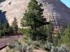 Zion-Nationalpark- Checkerboard Mesa