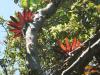 Costa Rica_Epiphyten