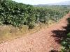 Costa Rica_Kaffeeplantage