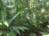 Costa Rica_Im Reservat Tirimbina