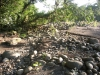 Costa Rica_Im Reservat Tirimbina_Rio Sarapiqui