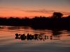 Brasilien_Im Pantanal_Gebiet Rio Mutum