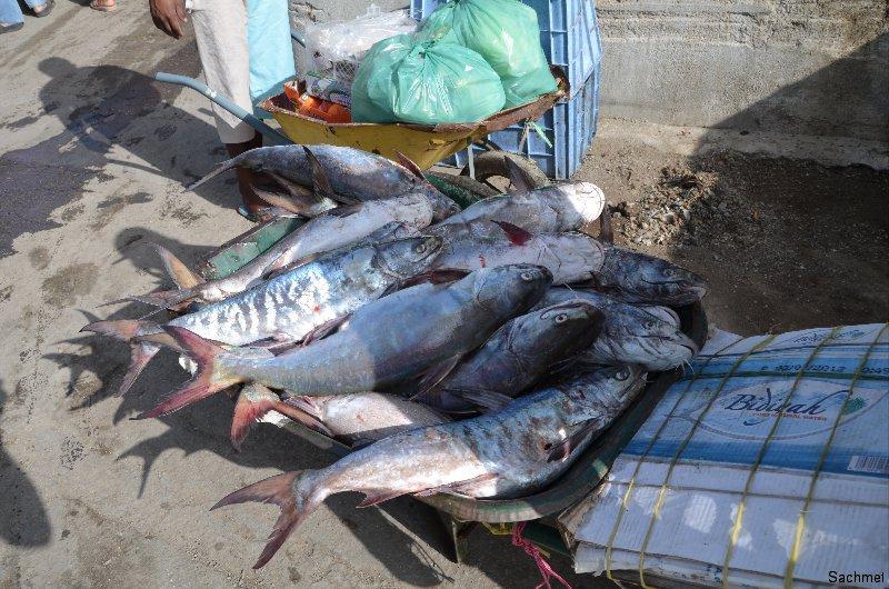 Maskat_Fischmarkt