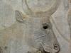 Persepolis - Apadana - Babylonier (Detail)