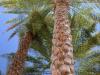 Oman_Oase Wadi Bani Khalid